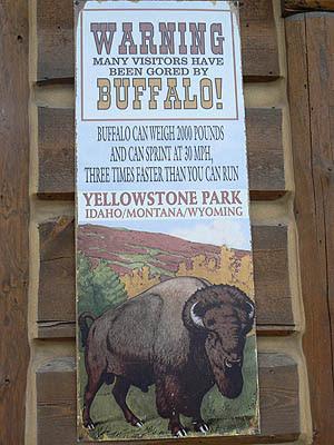 warning  Buffalos !.jpg