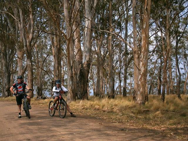 Acacia Plateau