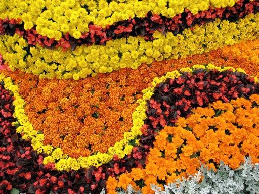 Beau Yellow Summer Bedding Plants Spot And Stripe