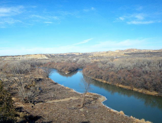 The far bank of the Hammond Tract on the San Juan River should be clear of the dense stand of invasive trees later this year and work will continue to install in-stream fish habitat  improvements and stocking to improve angling.