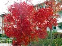 Röd buske på lekplatsen