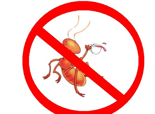 6 Effective Home Remedies To Get Rid of Ants From Home & Garden | Times Square Chronicles