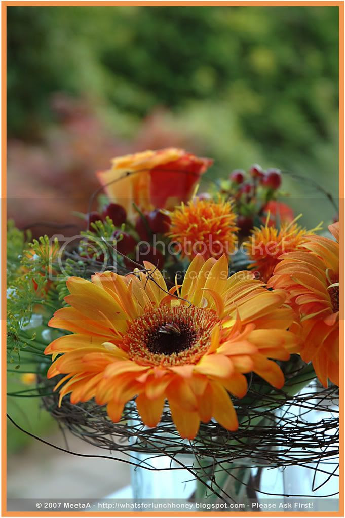 Orange Gerbera by MeetaA