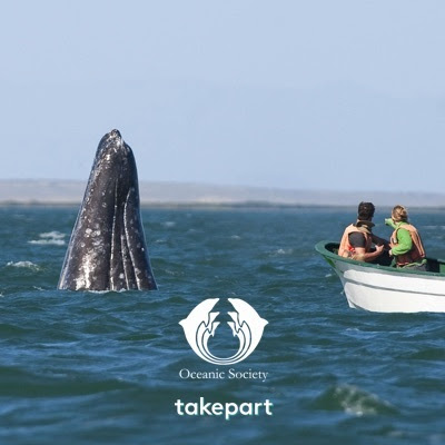The Great Gray Whale Migration Expedition Giveaway