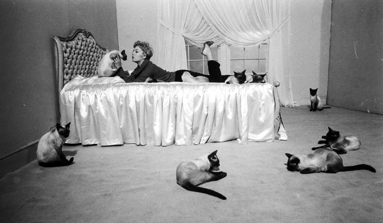 """Kim Novak playing with her """"Bell, Book and Candle"""" Siamese ..."""