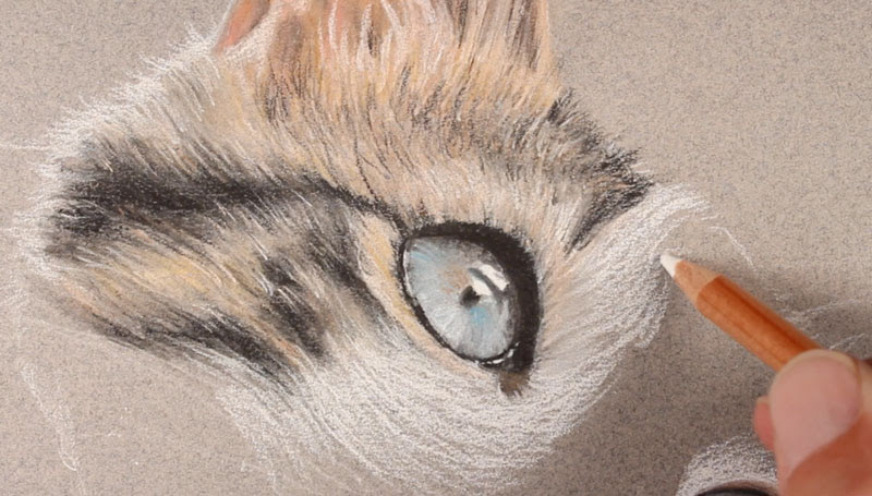 How to Draw a Cat with Pastels