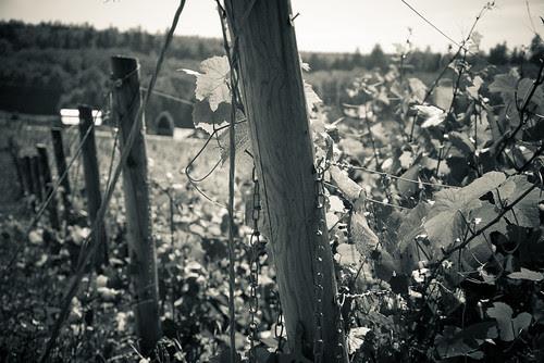 Vintage Vineyard Look