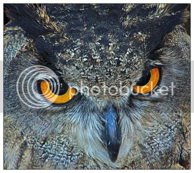 Los ojos de la noche