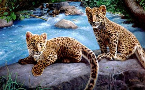 hd leopard cubs wallpaper