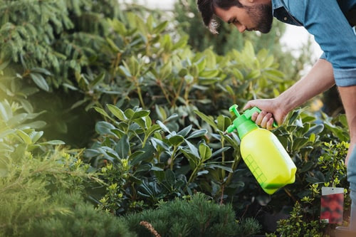 Safe and Effective Tree Pest Control Methods | Caledon Treeland