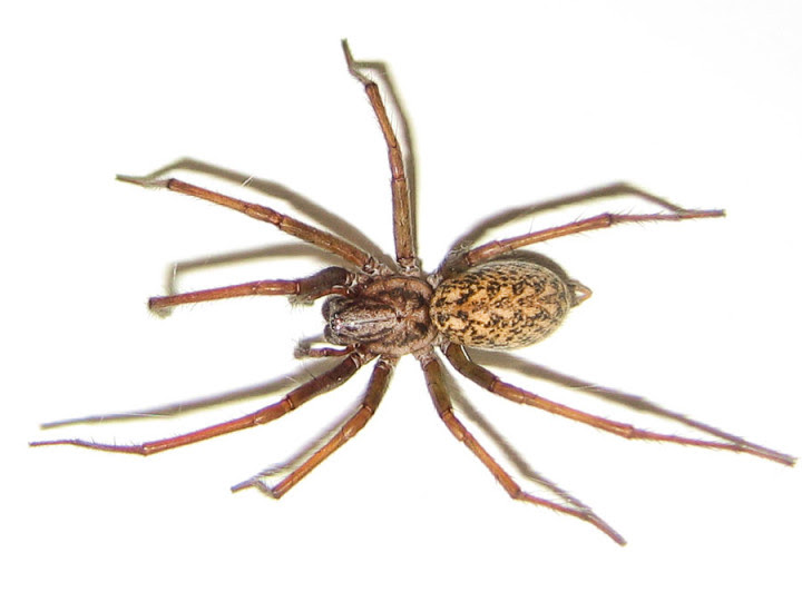 10 most dangerous spiders in the world
