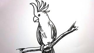 All Clip Of Menggambar Burung Kakak Tua Bhclipcom