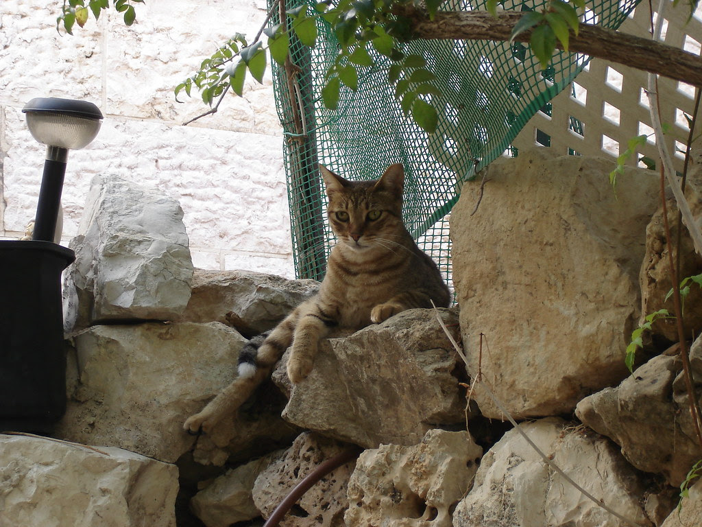 Tabby cat on rock wall