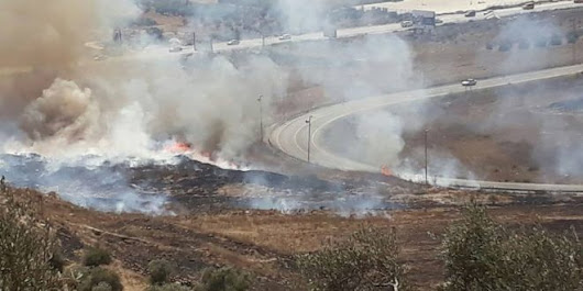 Settlers torch olive trees near Nablus, northern West Bank - PNN