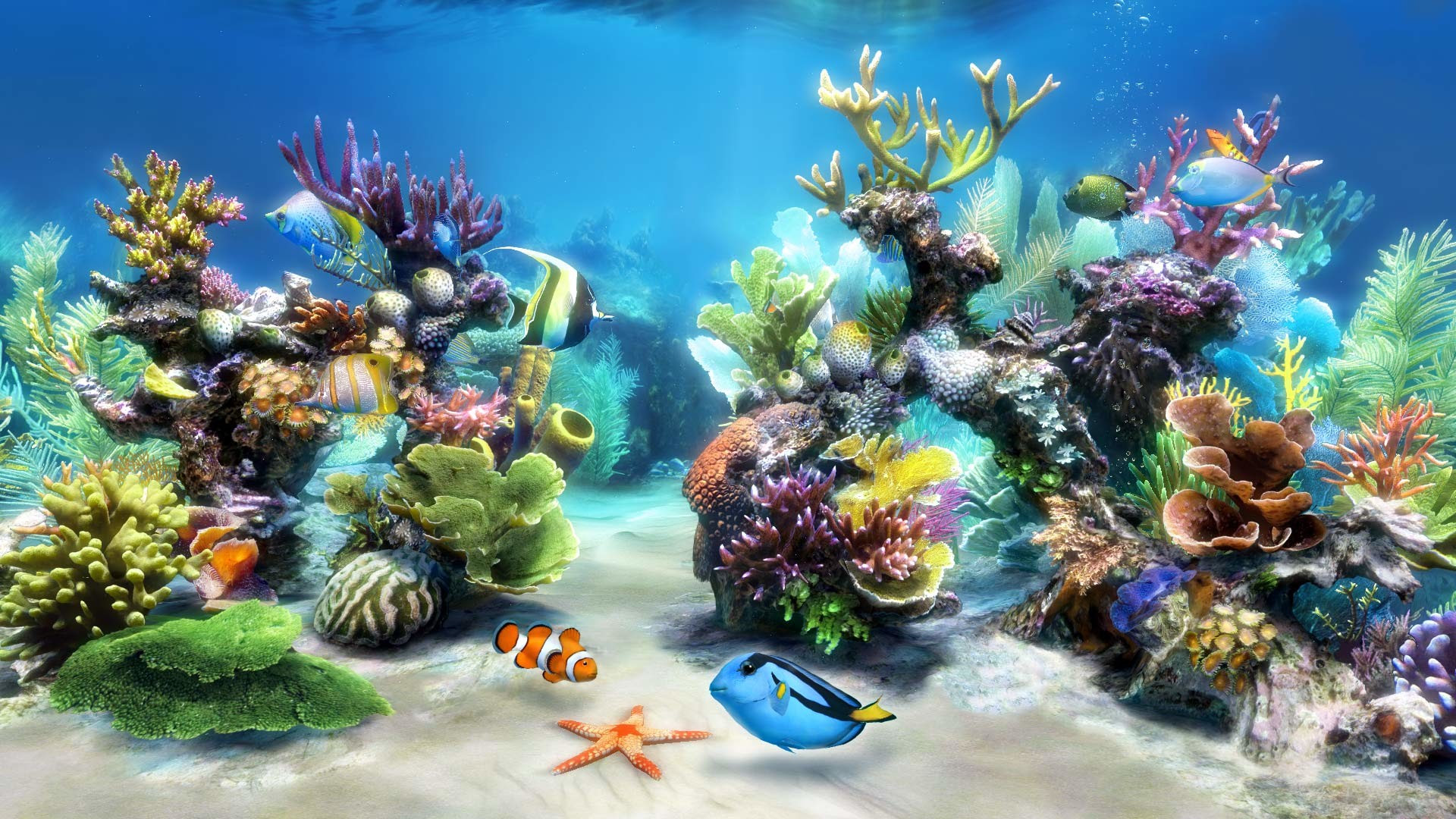 Coral Reef Live Wallpaper (59+ images)