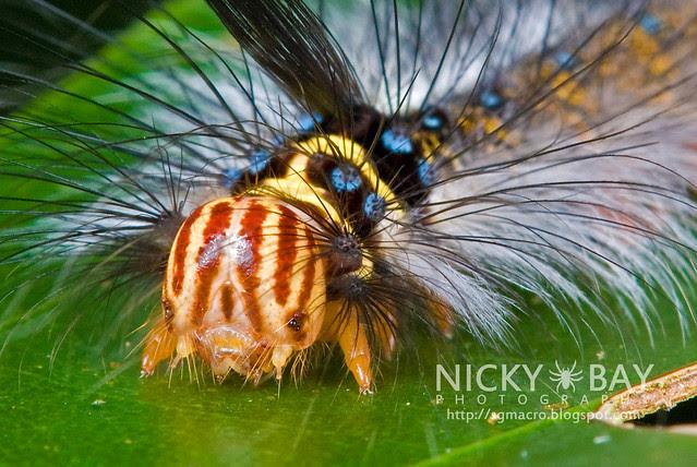 Caterpillar - DSC_7810