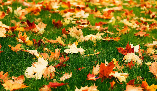 Fall Secrets For A Beautiful Lawn Next Spring