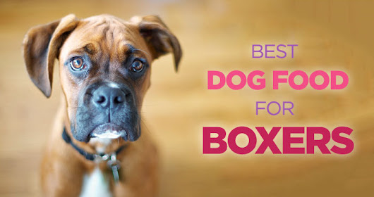 Best Dog Food for Boxers: High Protein Diet Is The Key