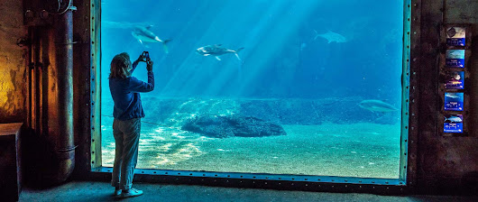 uShaka Marine World - World-Class Aquarium & Water Park | KZN