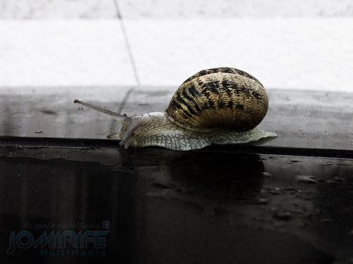 Caracol [en] Snail