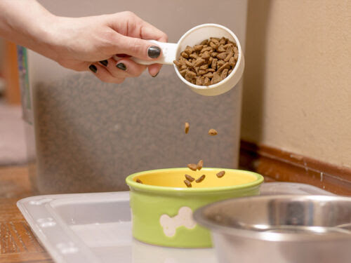 Setting Up a Proper Feeding Station for Your Dog