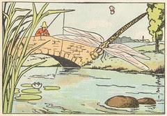 libellules et ruisseaux