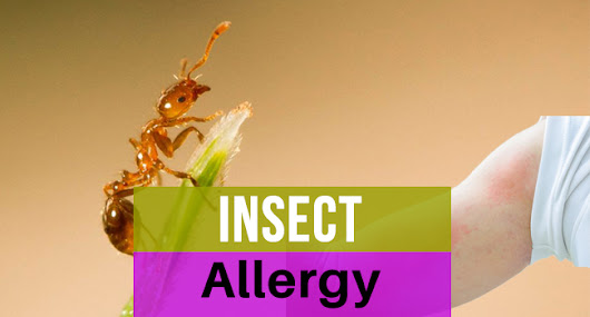 Insect Allergy - Allergy-symptoms.org