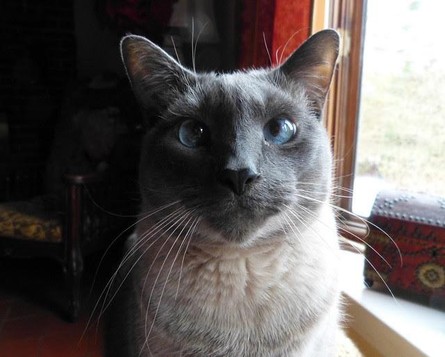 A cat named Feliz