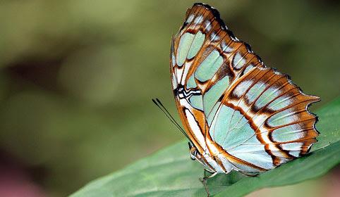 http://static.colourlovers.com/uploads/2007/05/winter_butterfly.jpg