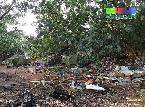Mangroves at Kranji - trash and marine debris