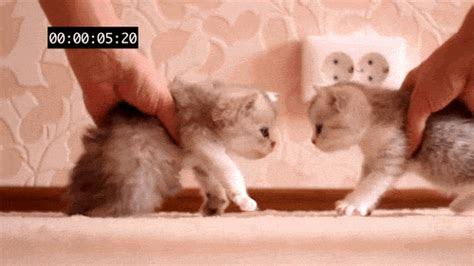 animasi hewan gif lucu koleksi gambar hewan lucu  unik