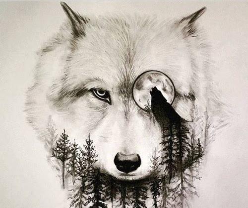 Perfil Dibujos Faciles Lobos Wwwimagenesmycom