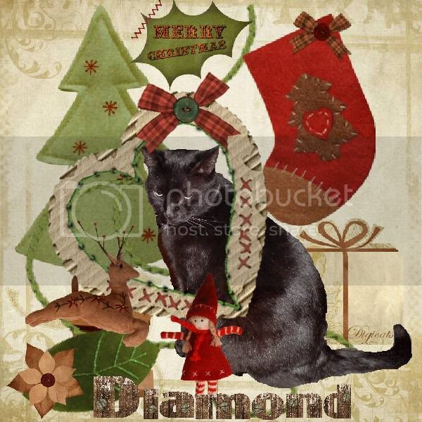 Christmas,House Panther,Domestic Cat,Miss Diamond