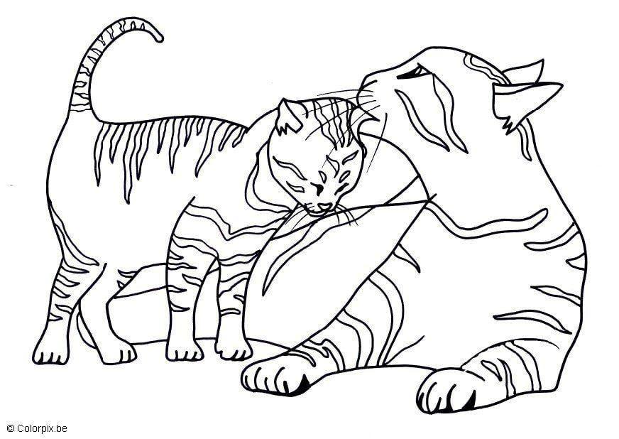 Und ausmalbilder kostenlos katzen hunde Malvorlage Katze