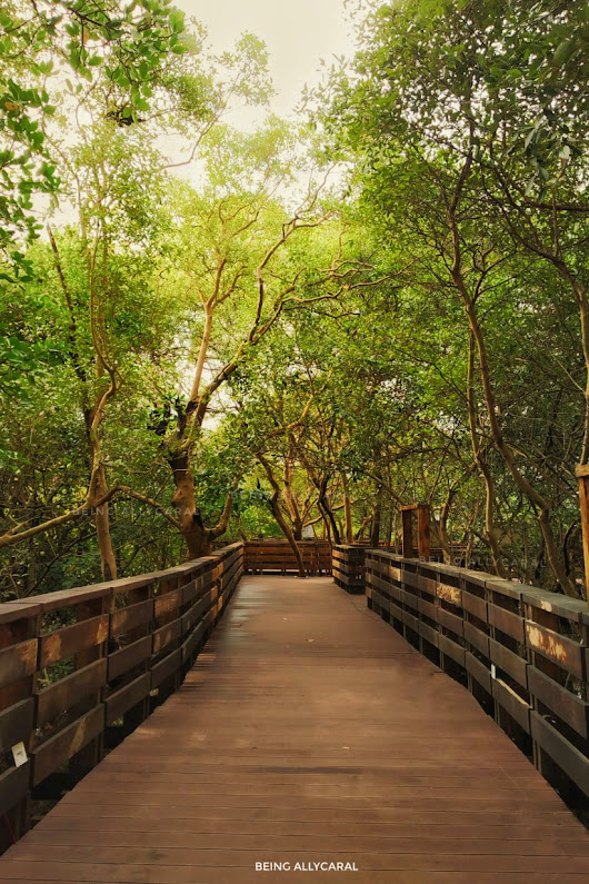 Panjim's Mangrove Foot Bridge