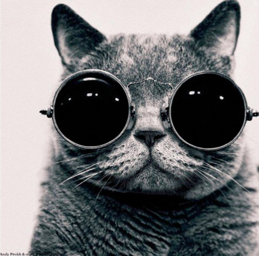 Lilu, The Cat With Glasses