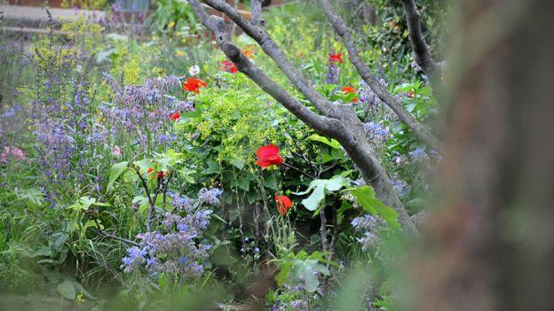A Perfumer's Garden at Chelsea, 2015