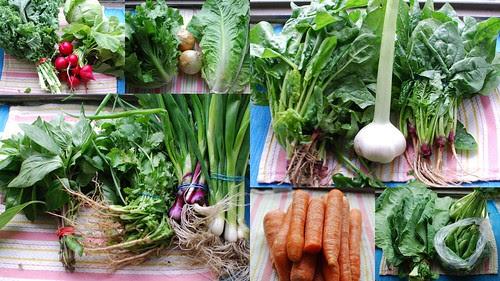 CSA Week 2: Veggies