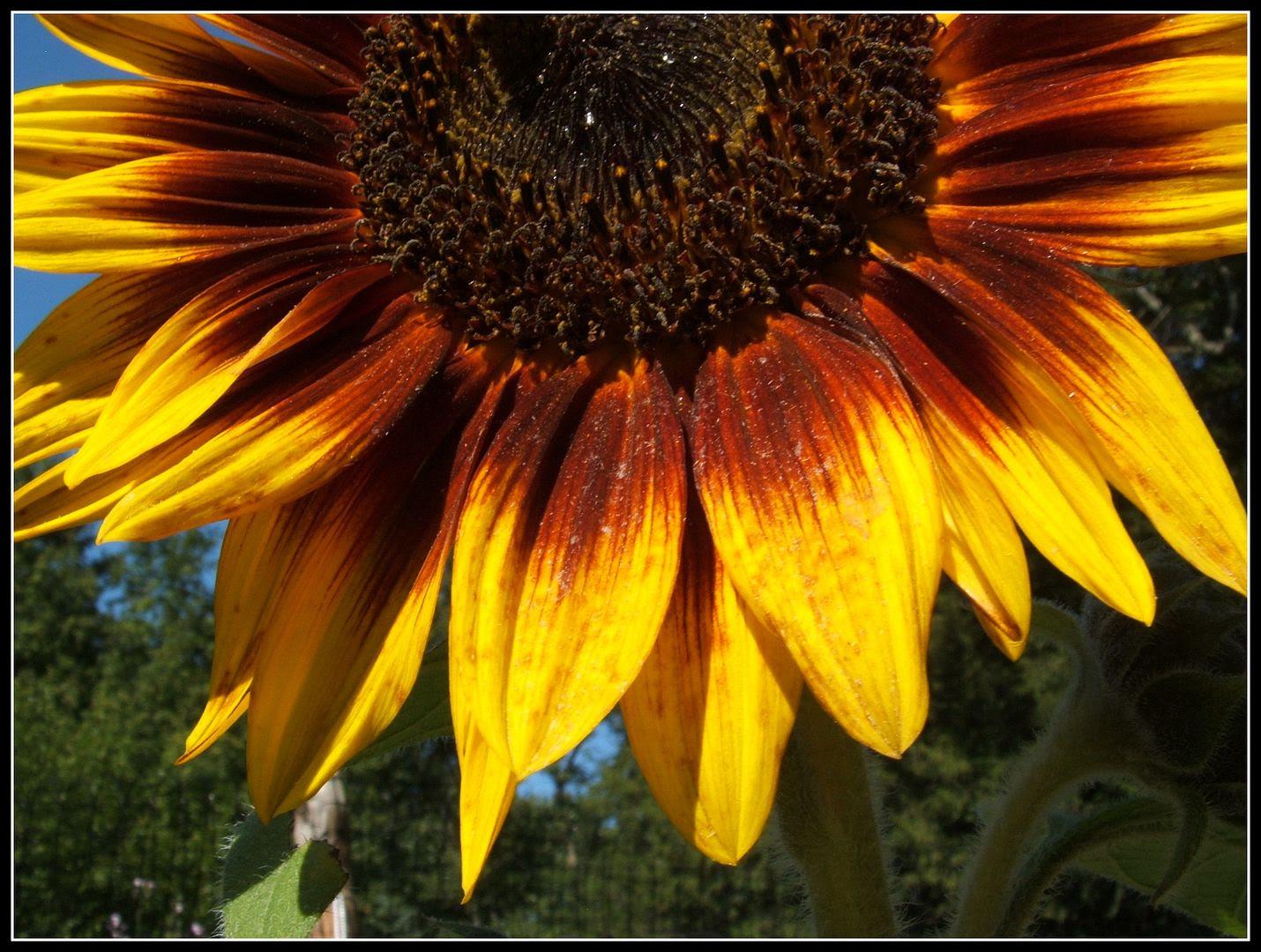 by Angie Ouellette-Tower for http://www.godsgrowinggarden.com/ photo DSCF9039_zpsokzu2lzk.jpg