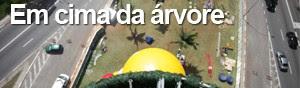 Conheça detalhes da árvore do Ibirapuera (Fabio Tito/G1)