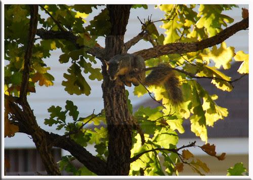 schemingsquirrel