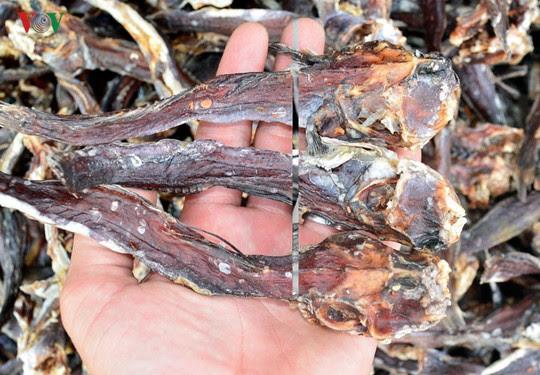 Câu cá thòi lòi ở rừng ngập mặn Cà Mau - Ảnh 9.