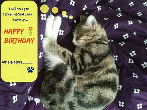 Sleeping Kitty Birthday Wish. Free Belated Birthday Wishes