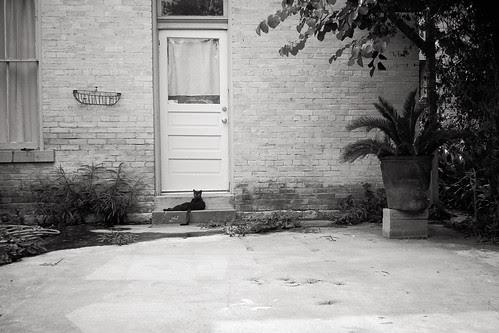 """""""Le Noir Chat"""" by Jesse Acosta"""