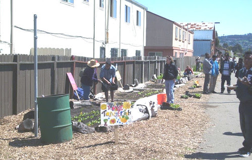 Volunteers plant fruit trees as part of the Edible Forest in Richmond, Calif.