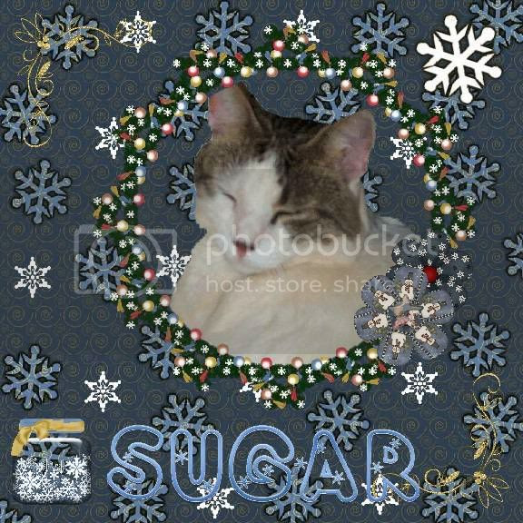 Domestic Cat,Bi-Colored Cat,Winter,Snowcats Project,Happy Holidays,Holiday Glitter