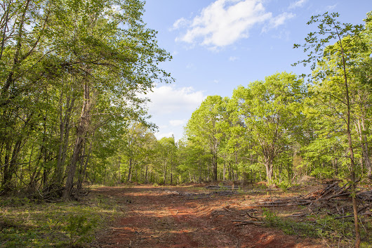 219.6 Acres for sale on Burnside Road in Vance County NC