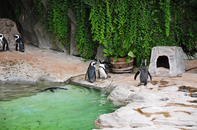 Ueno Zoo(2008.7.19) - 075