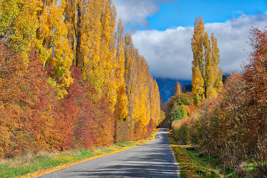 Speargrass Flats Road (near Arrowtown, New Zealand) | Stuck in Customs