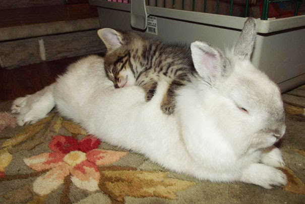 Kitty And Bunny